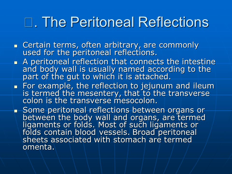 Ⅲ. The Peritoneal Reflections