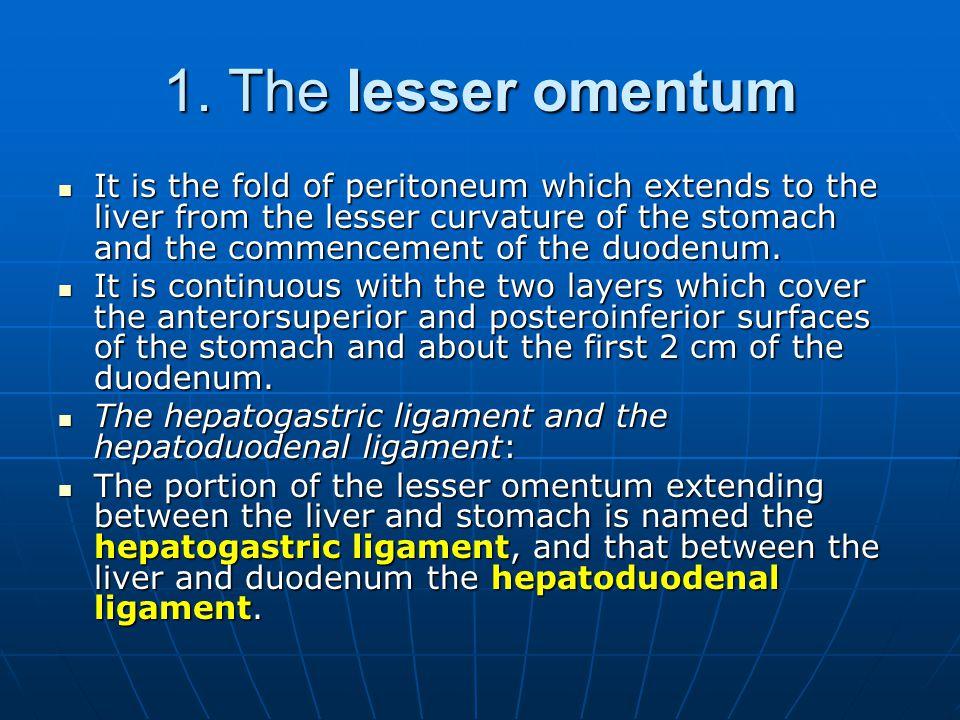 1. The lesser omentum