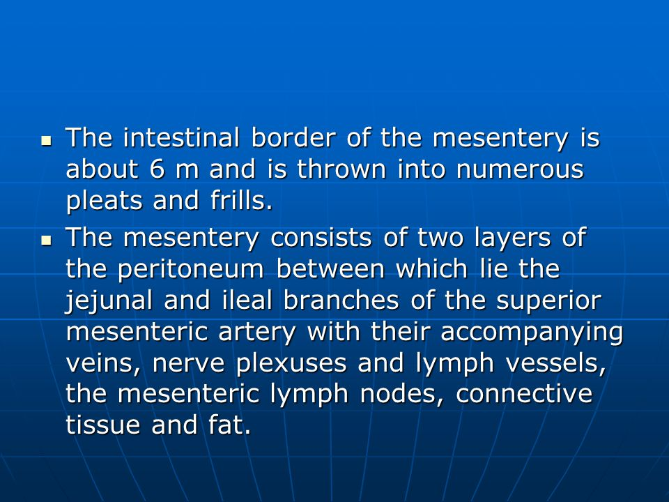 The intestinal border of the mesentery is about 6 m and is thrown into numerous pleats and frills.