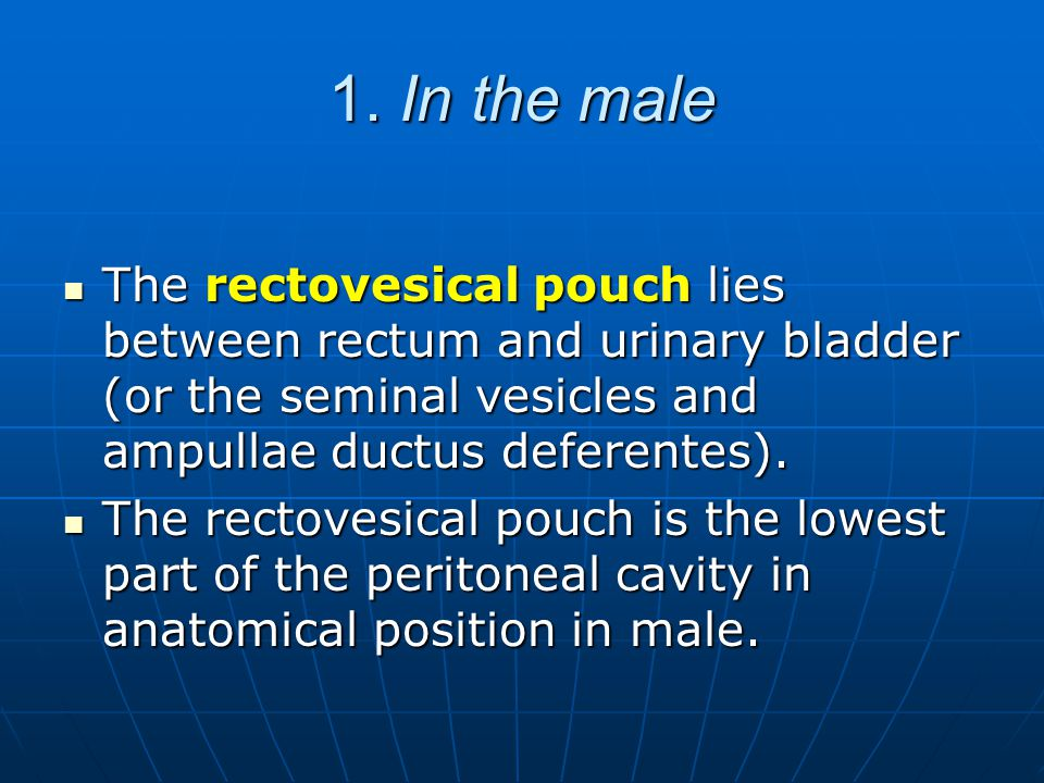 1. In the male The rectovesical pouch lies between rectum and urinary bladder (or the seminal vesicles and ampullae ductus deferentes).