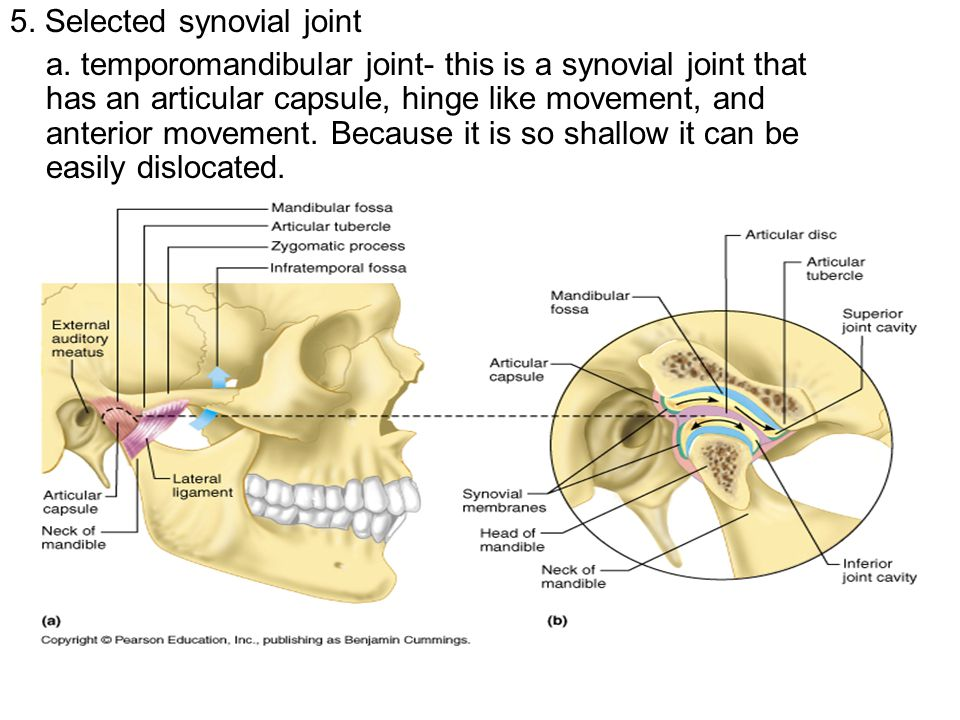 5. Selected synovial joint