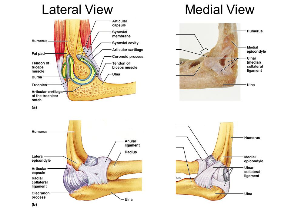 Lateral View Medial View