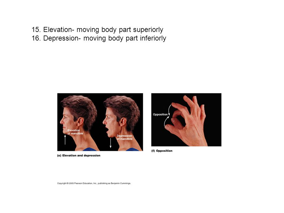 15. Elevation- moving body part superiorly