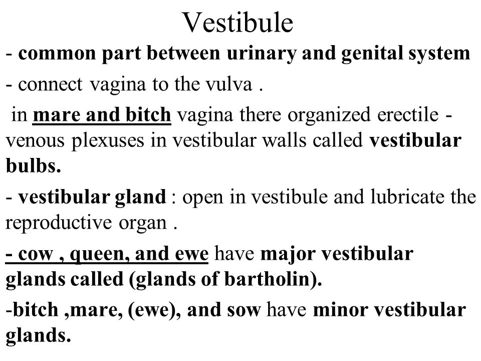 Vestibule - common part between urinary and genital system