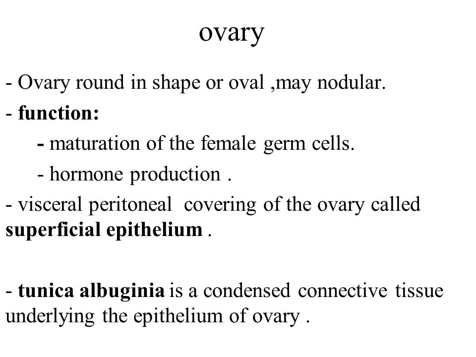 ovary - Ovary round in shape or oval ,may nodular. - function: