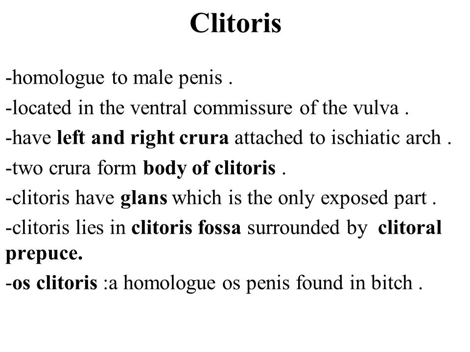 Clitoris -homologue to male penis .