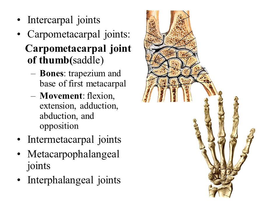 Carpometacarpal joints: Carpometacarpal joint of thumb(saddle)