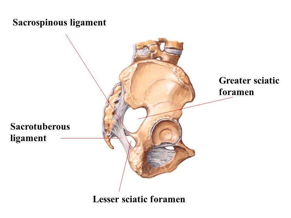 Sacrospinous ligament
