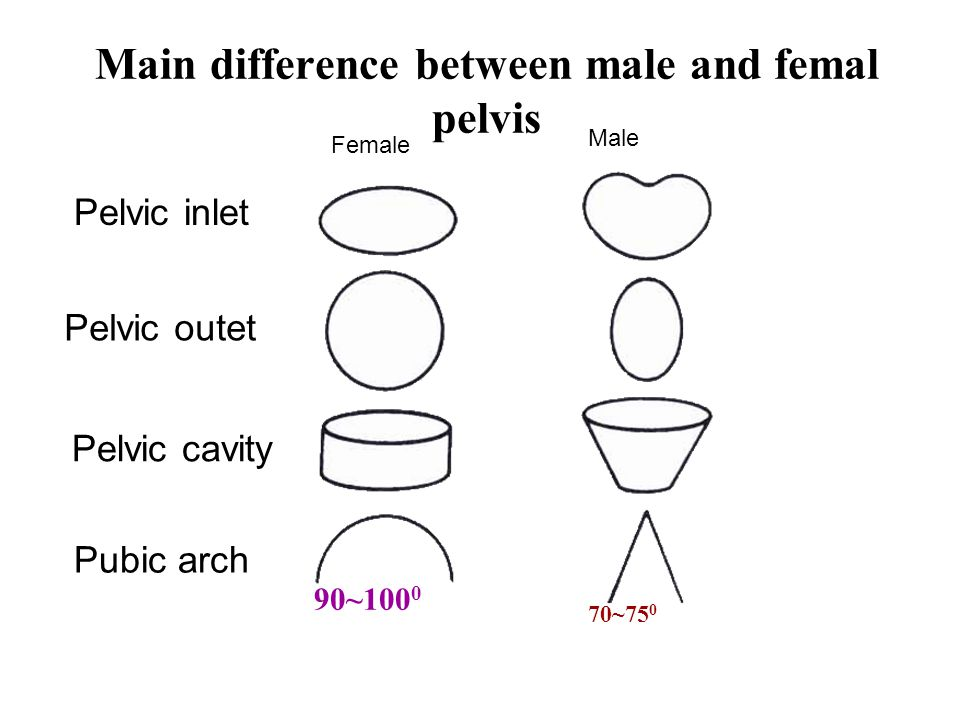Main difference between male and femal pelvis