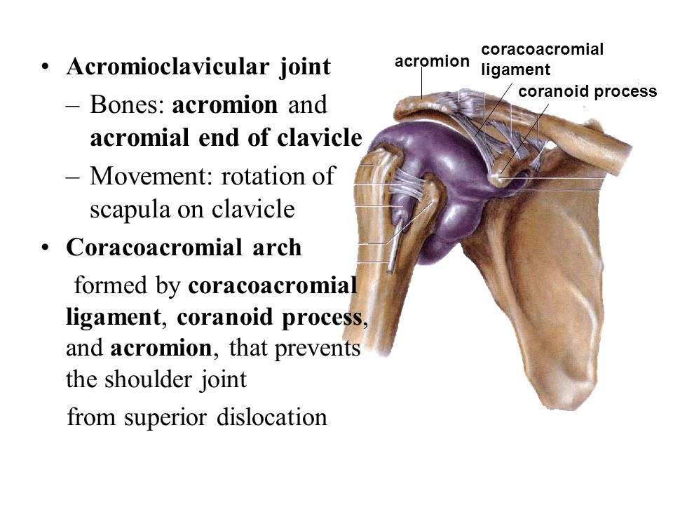 Bones: acromion and acromial end of clavicle