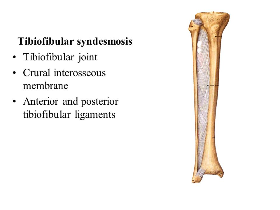 Tibiofibular syndesmosis