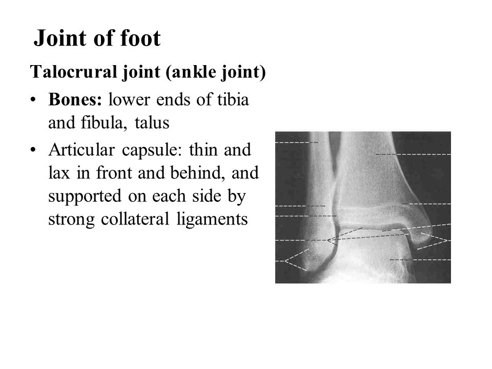 Joint of foot Talocrural joint (ankle joint)