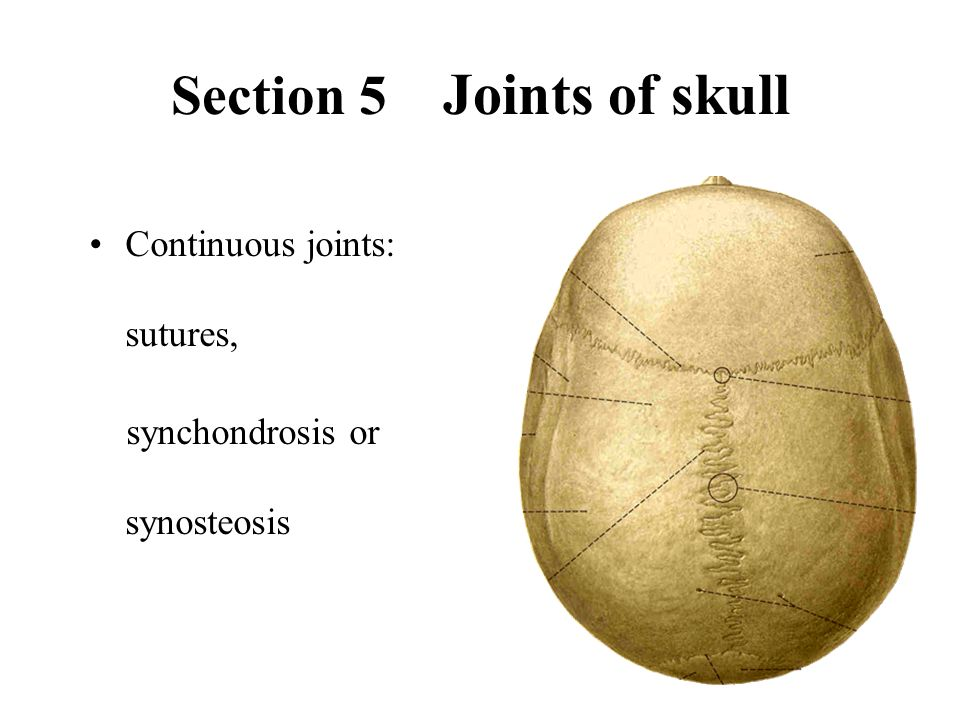 Section 5 Joints of skull