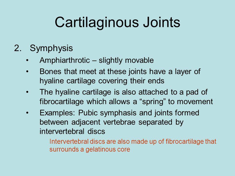 Cartilaginous Joints Symphysis Amphiarthrotic – slightly movable