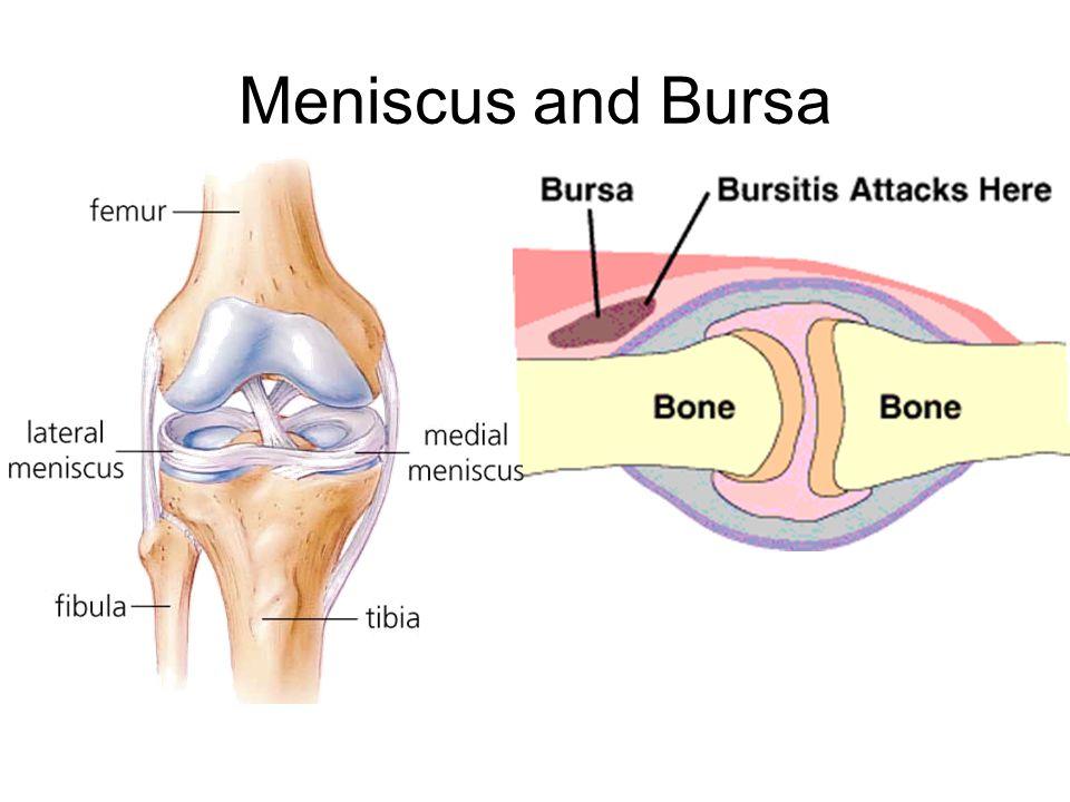 Meniscus and Bursa