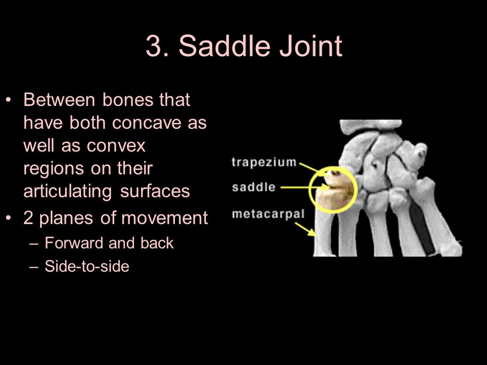 3. Saddle Joint Between bones that have both concave as well as convex regions on their articulating surfaces.