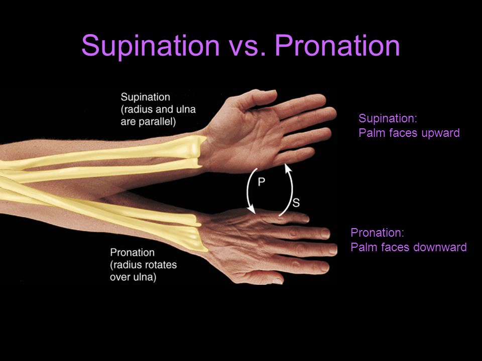 Supination vs. Pronation