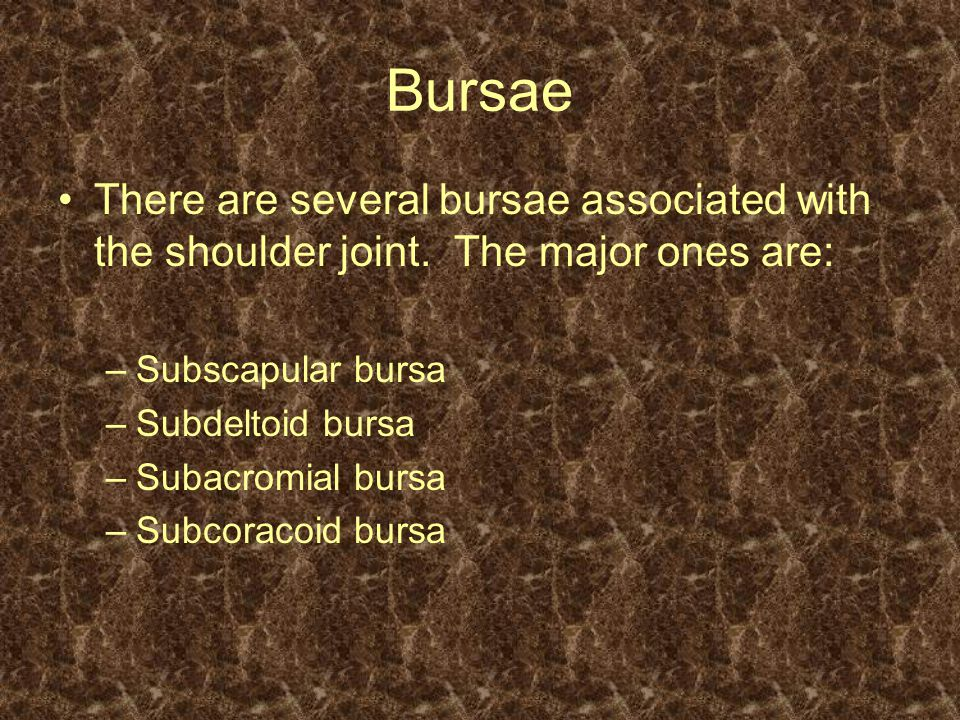 Bursae There are several bursae associated with the shoulder joint. The major ones are: Subscapular bursa.