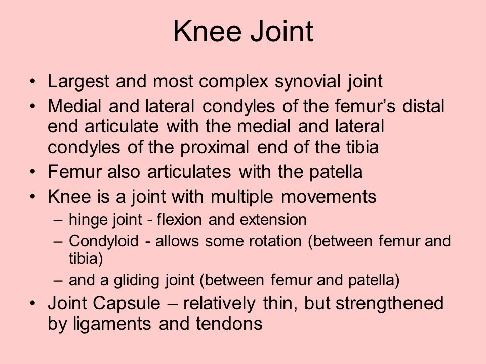 Knee Joint Largest and most complex synovial joint