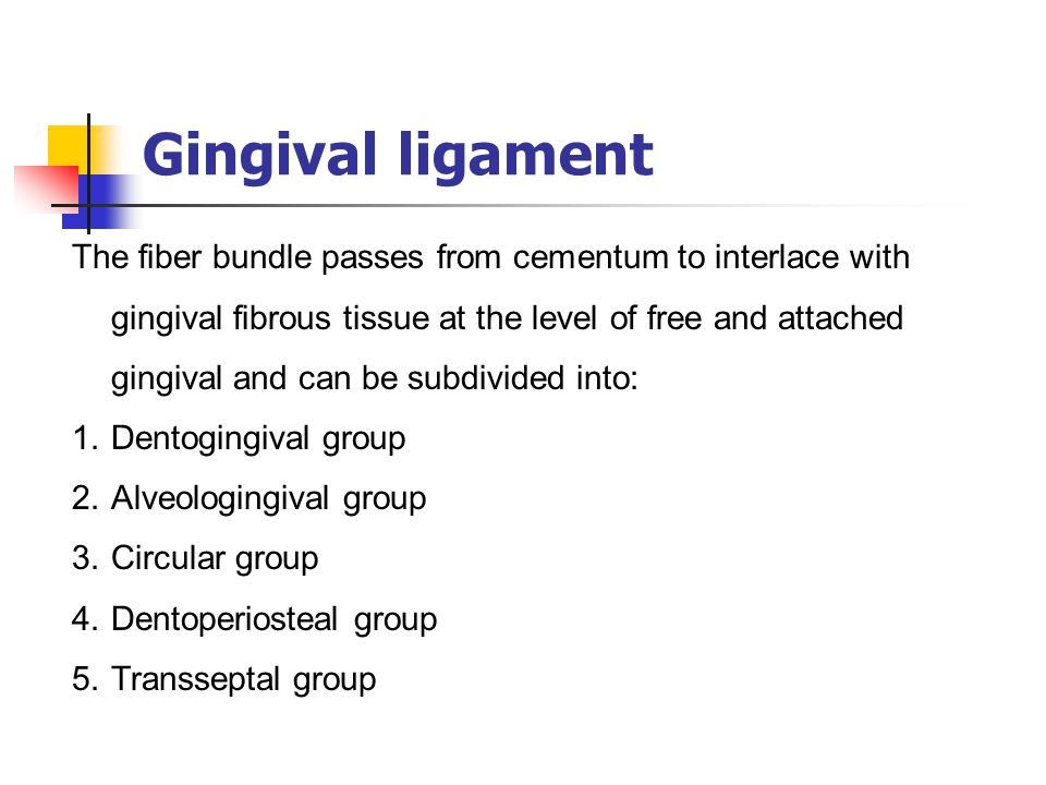 Gingival ligament