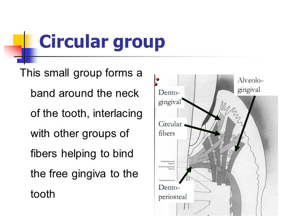 Circular group