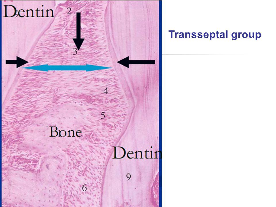 Transseptal group