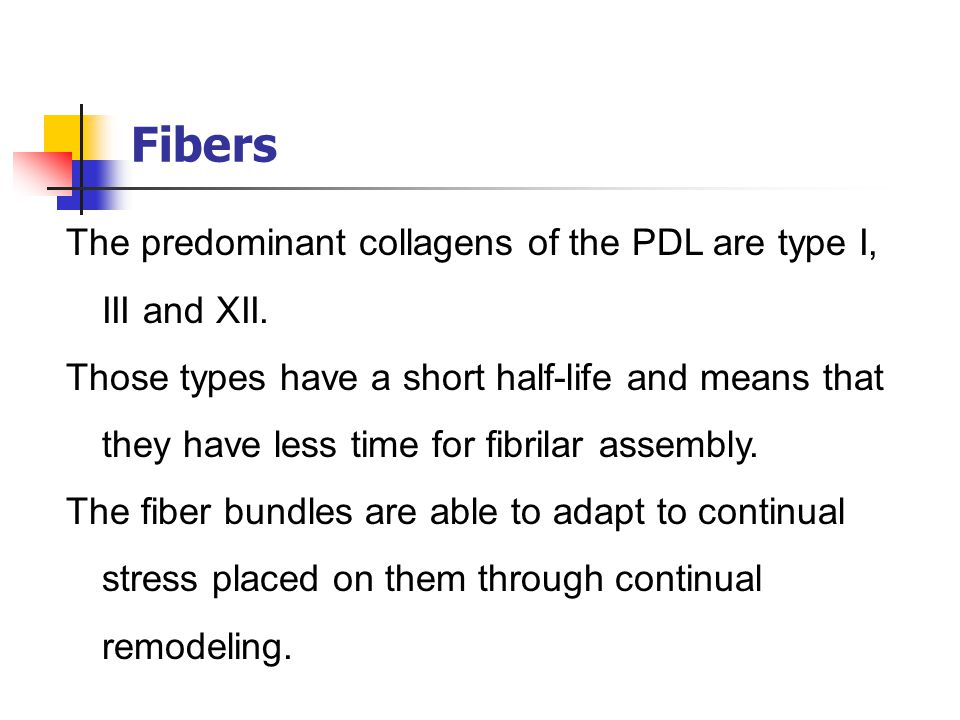 Fibers The predominant collagens of the PDL are type I, III and XII.