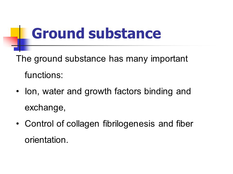 Ground substance The ground substance has many important functions: