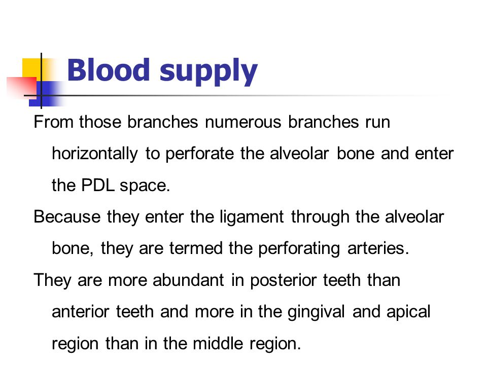 Blood supply From those branches numerous branches run horizontally to perforate the alveolar bone and enter the PDL space.