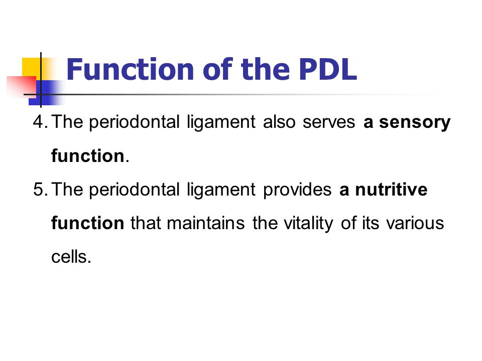 Function of the PDL The periodontal ligament also serves a sensory function.