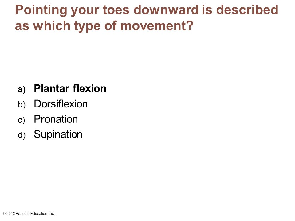 Pointing your toes downward is described as which type of movement