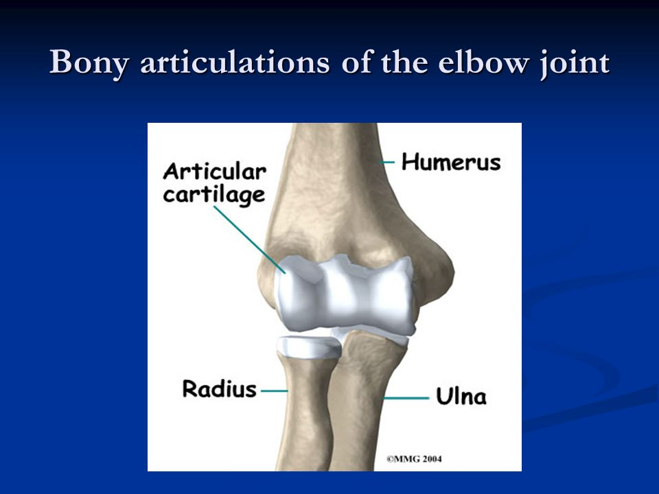 Bony articulations of the elbow joint