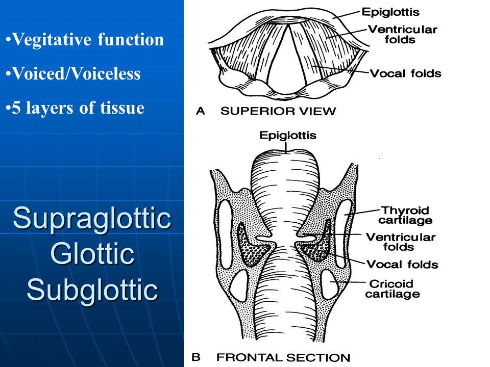 Supraglottic Glottic Subglottic