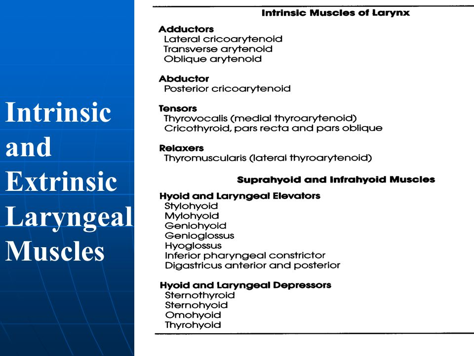 Intrinsic and Extrinsic Laryngeal Muscles