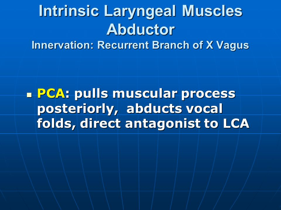 Intrinsic Laryngeal Muscles Abductor Innervation: Recurrent Branch of X Vagus