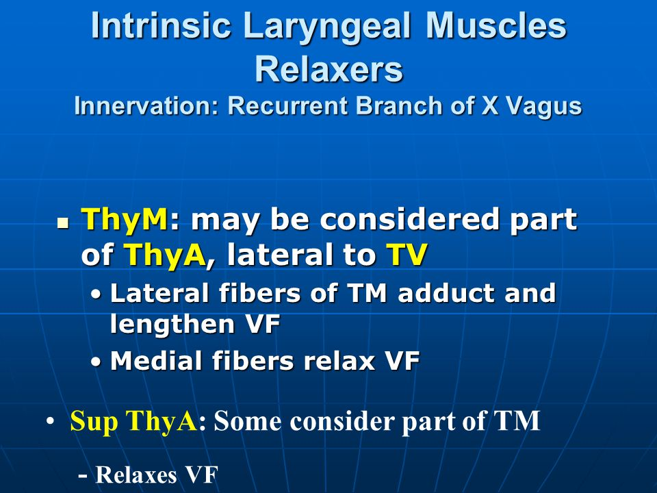 Intrinsic Laryngeal Muscles Relaxers Innervation: Recurrent Branch of X Vagus