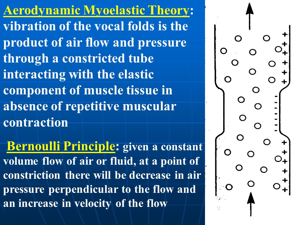 Aerodynamic Myoelastic Theory: vibration of the vocal folds is the product of air flow and pressure through a constricted tube interacting with the elastic component of muscle tissue in absence of repetitive muscular contraction