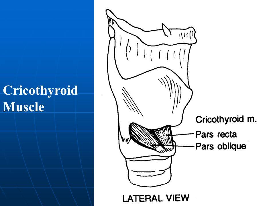 Cricothyroid Muscle