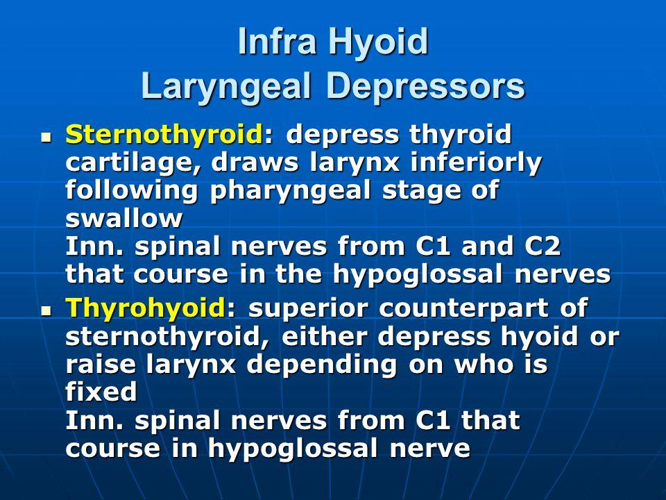 Infra Hyoid Laryngeal Depressors