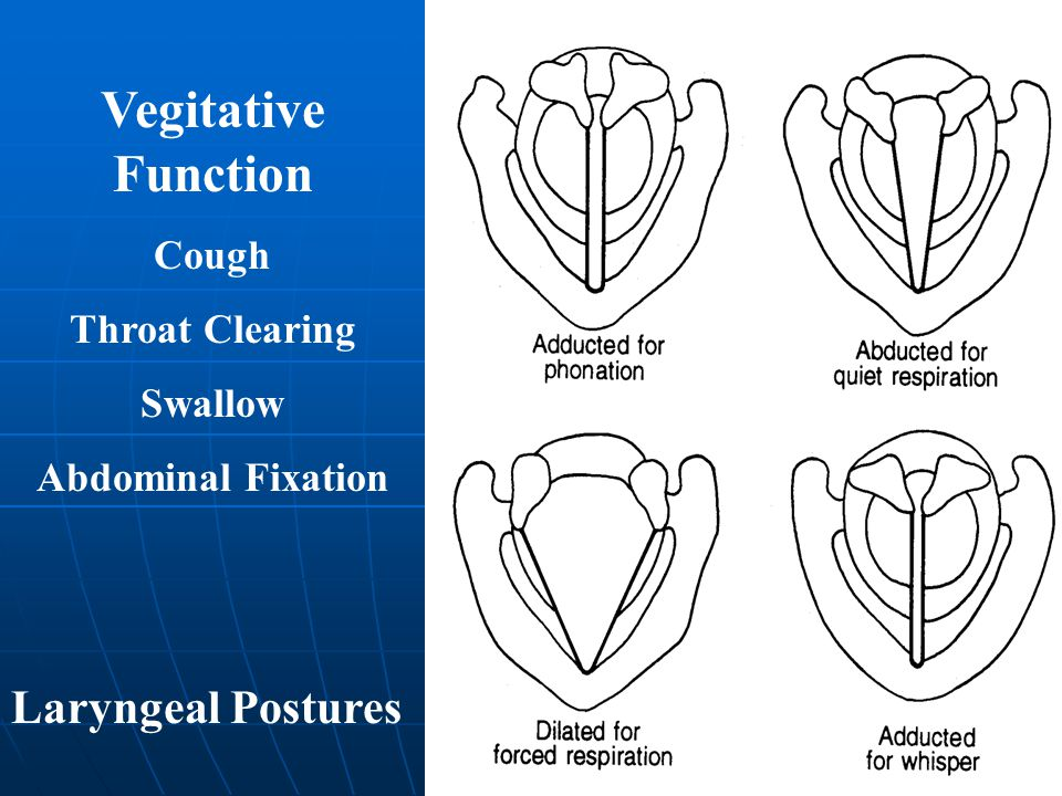 Vegitative Function Laryngeal Postures Cough Throat Clearing Swallow