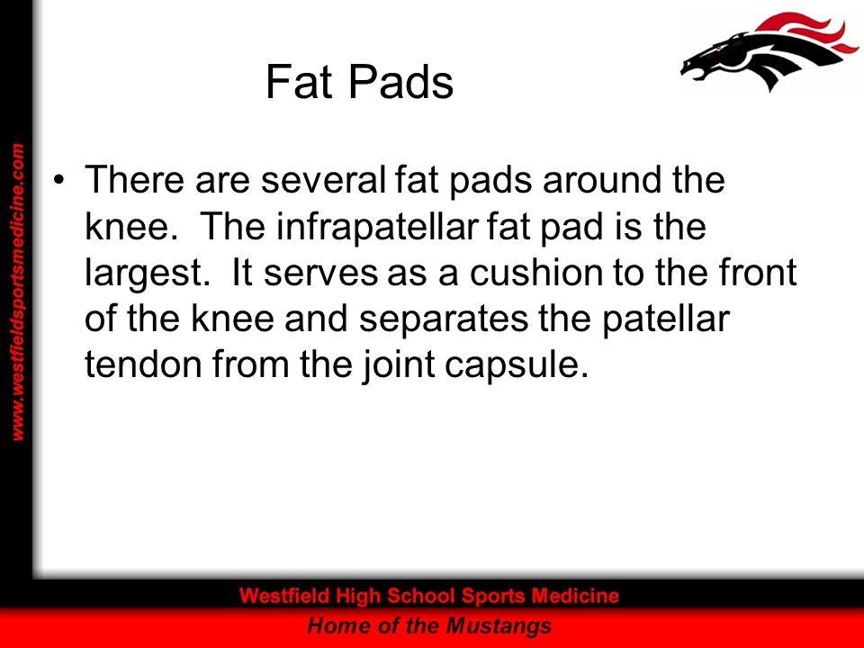 Fat Pads