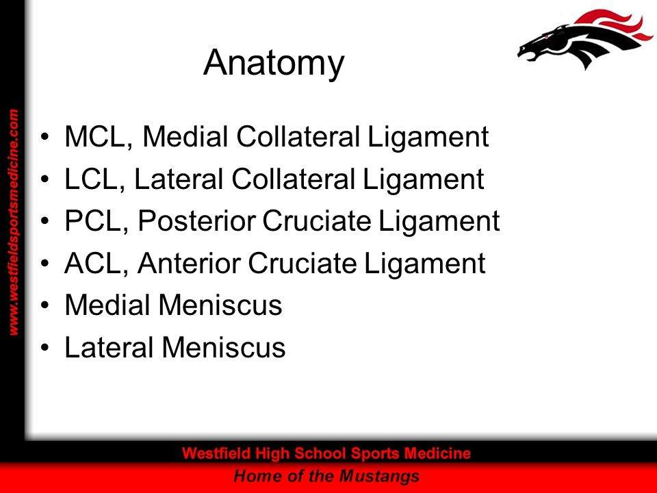 Anatomy MCL, Medial Collateral Ligament