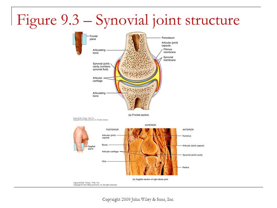 Figure 9.3 – Synovial joint structure
