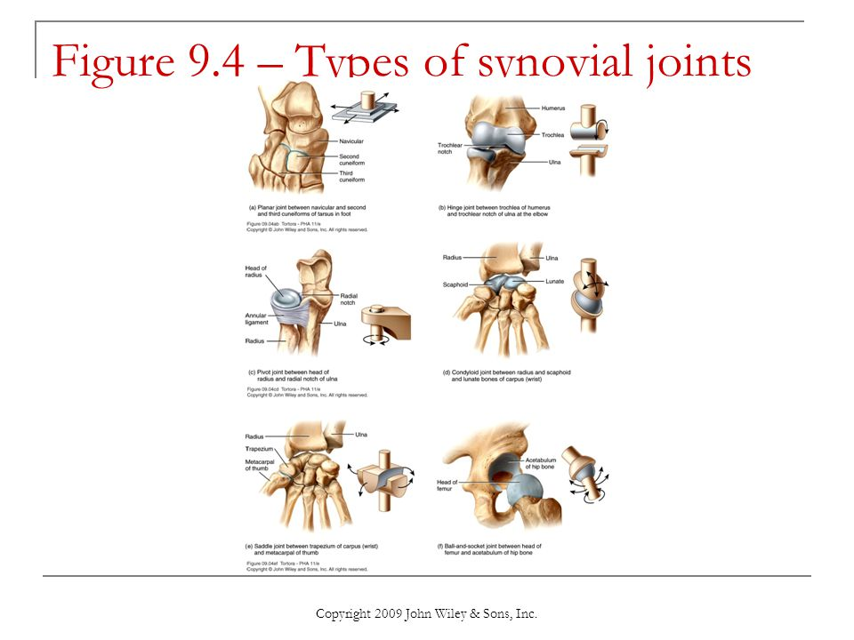Figure 9.4 – Types of synovial joints