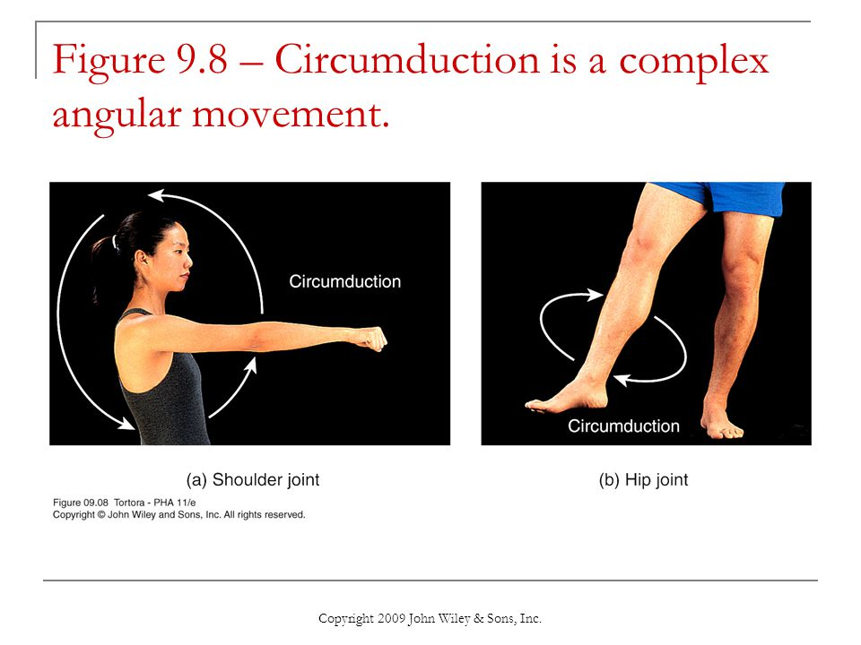 Figure 9.8 – Circumduction is a complex angular movement.