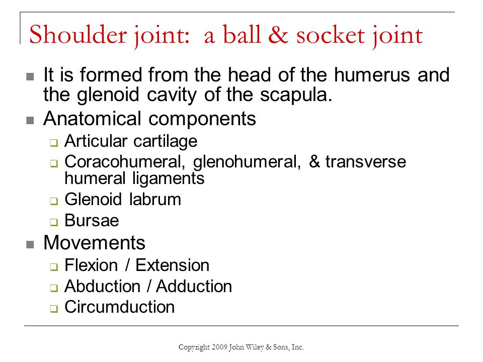 Shoulder joint: a ball & socket joint