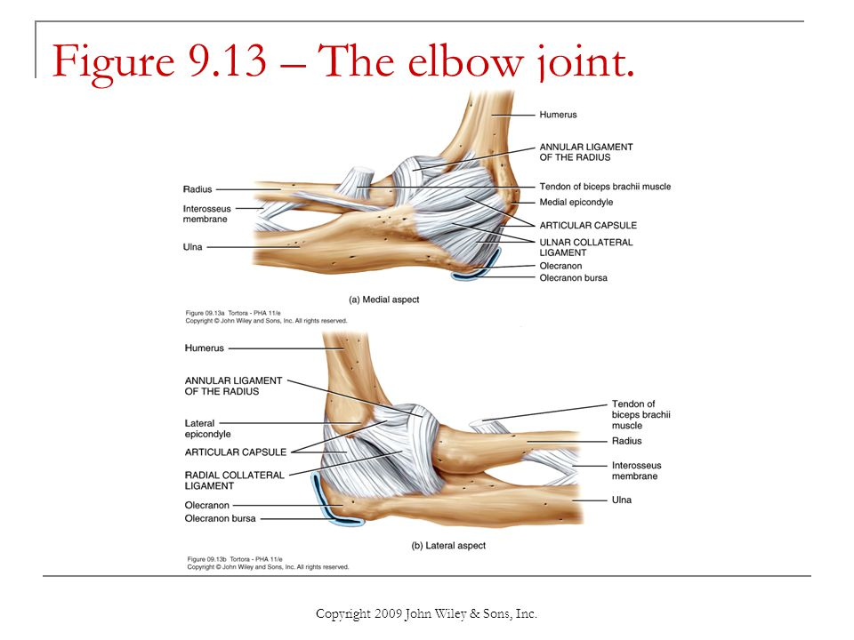 Figure 9.13 – The elbow joint.