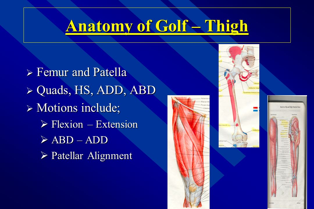Anatomy of Golf – Thigh Femur and Patella Quads, HS, ADD, ABD