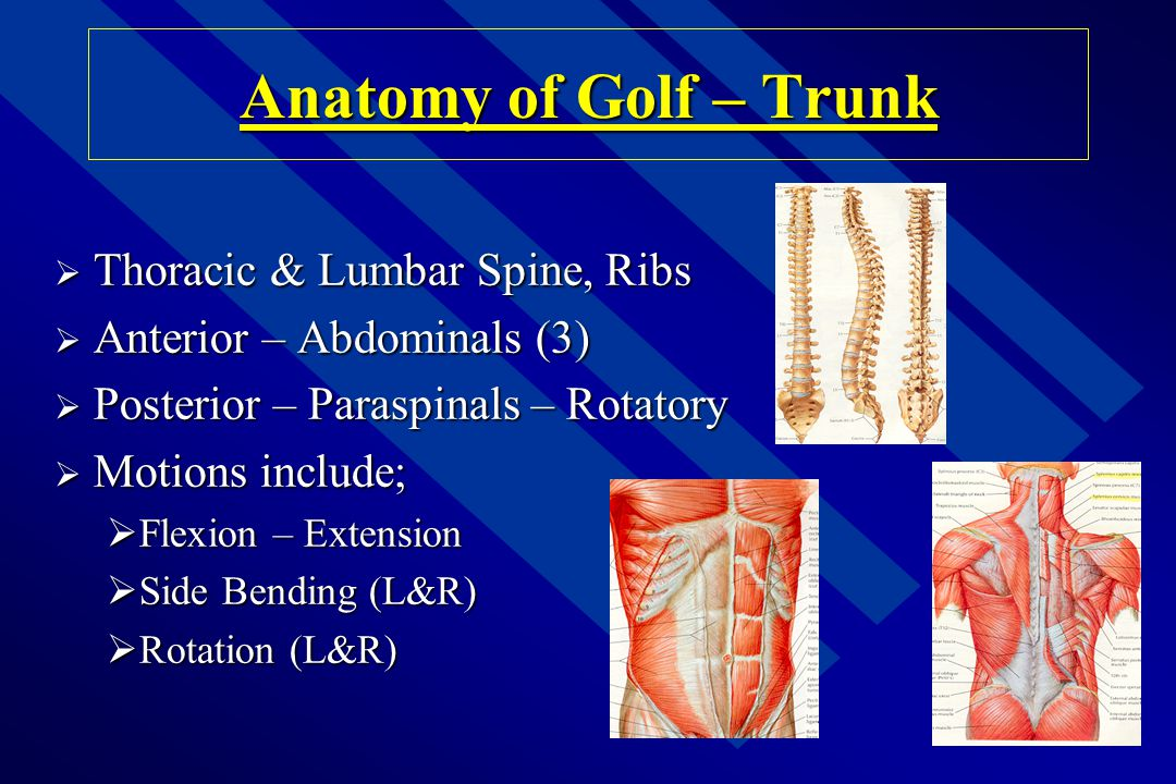 Anatomy of Golf – Trunk Thoracic & Lumbar Spine, Ribs