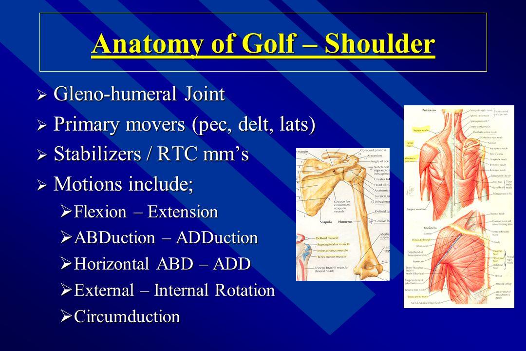 Anatomy of Golf – Shoulder